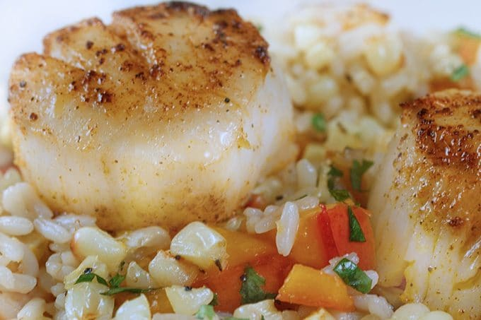 fresh scallops pan seared with a nice crust served over a combination of rice and white corn