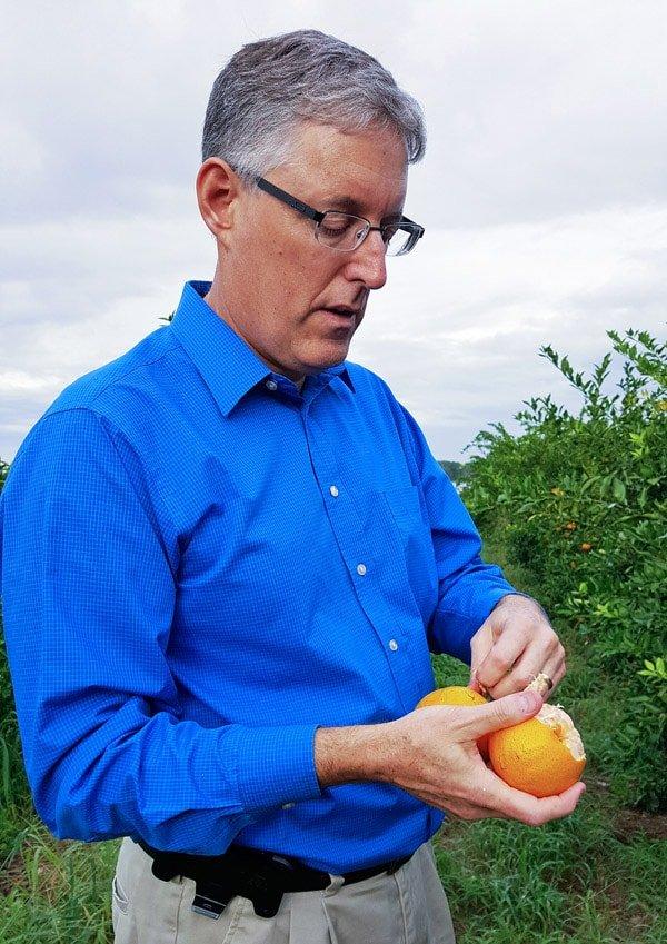 tangerines, Roe Family