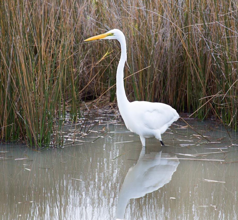 Merritt Island National Wildlife Refuge, Cape Canaveral