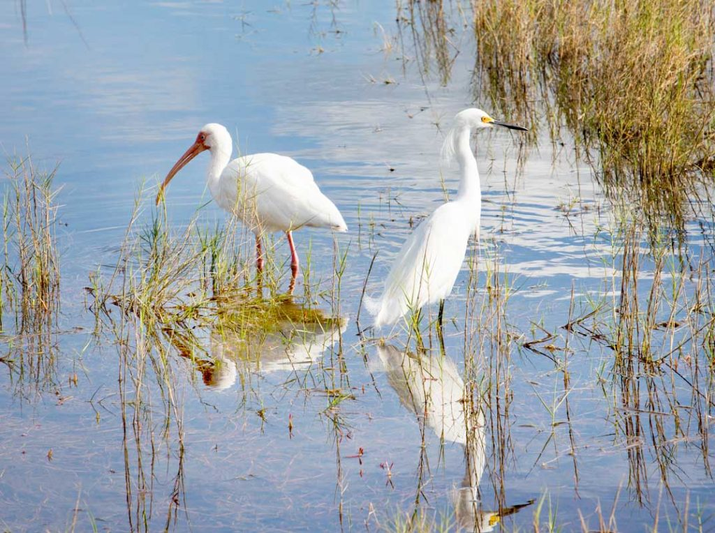 Merritt Island Wildlife Refuge, Cape Canaveral