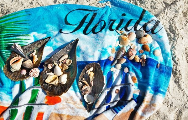 sanibel and captiva shells