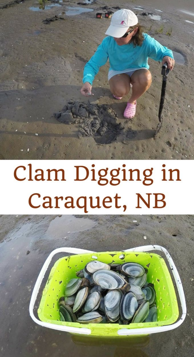 woman digging for clams and bucket of clams. Text reads clam digging in Caraquet, NB