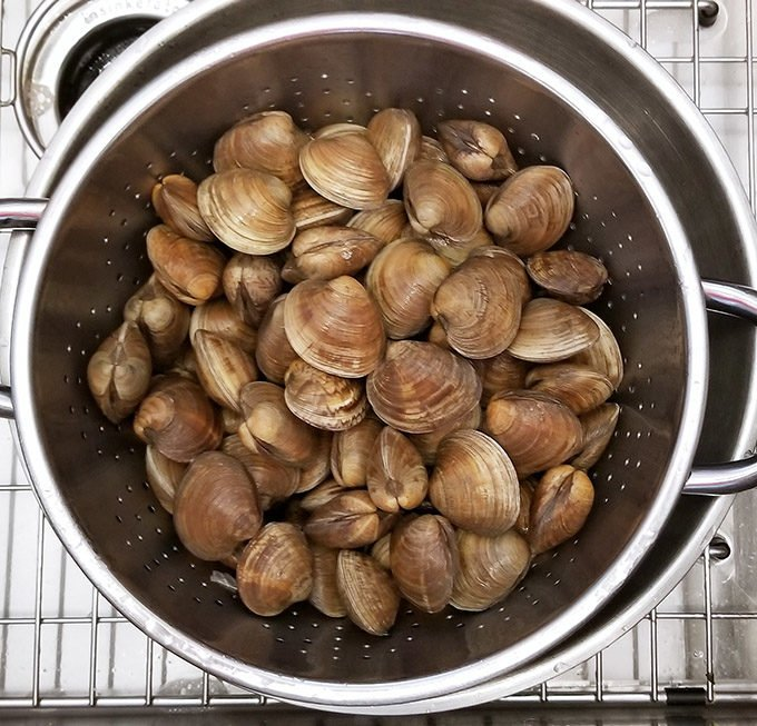 whole little neck clams in a colander as they wash