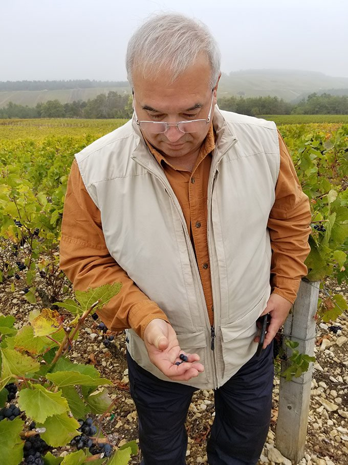 Chef Dennis holding grapes at the Champagne Vineyard in Les Riceys