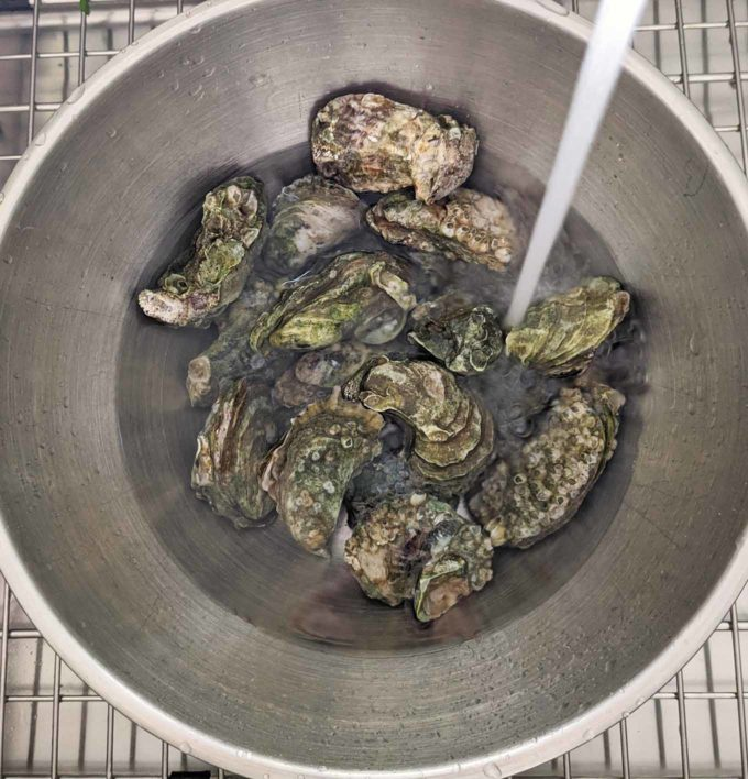 overhead shot of oysters in a stainless steel bowl with running water
