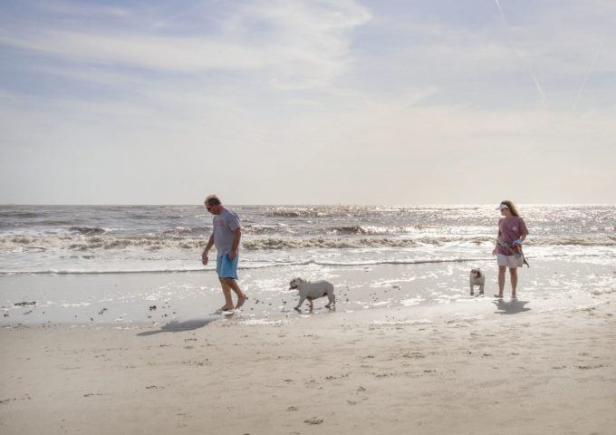 two dogs and two people on the beach at st simons island