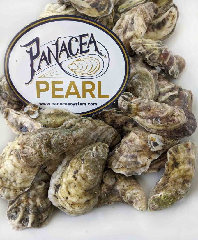 live oysters on a white platter with the Pancea Pearl logo