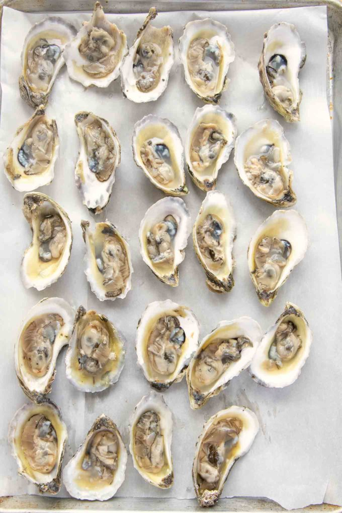 24 oysters open on the half shell on a sheet pan